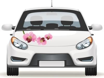 Orchidea virágos autómatrica